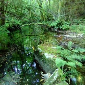 Río Gorgua, a cuya lado discurren ambas pruebas.